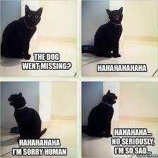Sad Animal Memes - meme sad cat viral viral videos