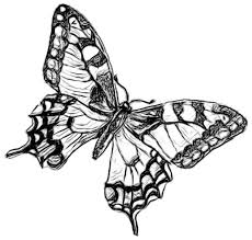 coloring pages of butterfly drawing butterflies 03 butterflies png coloring pages lightofunity