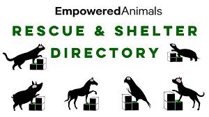 find a pet rescue organization or animal shelter grisha stewart