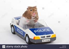 police car toy hamster in a toy police car stock photo royalty free image