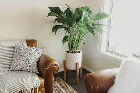 Home Decoration Plants by Plant Stand Living Room Plant Stands Stand From Floor To