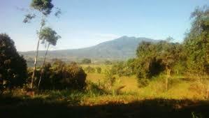17 925 sqm titled farm land in salvador benedicto u2013 negros island