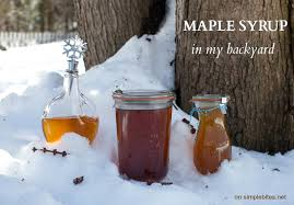 Backyard Maple Syrup by What We Learned About Making Maple Syrup Simple Bites