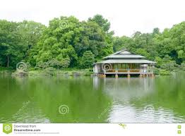 green tree traditional japanese house garden and water pond