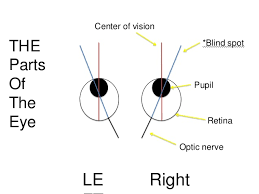 The Blind Spot In The Eye Is Due To The Blind Spot In Your Eye Currency In India Converter