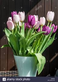 purple and white tulips in bucket easter decoration flowers brown