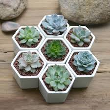 Cactus Planter by Hexagon Mini Planter Choice Of Succulent Or Cacti By Dingading