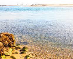 rileys beach cotuit cape cod ma