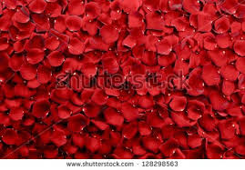real petals petals background real roses stock photo 128298563