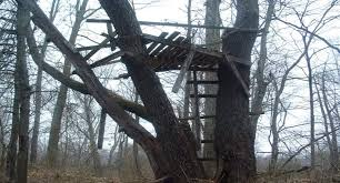 15 pictures that perfectly show the unique mystery of treestands