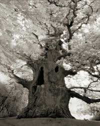 ancient trees spends 14 years photographing world s oldest