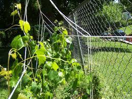 popular muscadine grape arbor plans ideas wood working