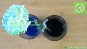 blue carnations 3 ways to dye carnations wikihow