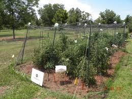 emerging technology net houses for backyard vegetable production