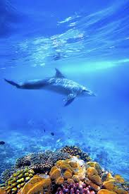 experience swimming with dolphin in zanzibar art of safari