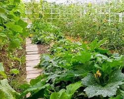 does growing produce in a greenhouse reduce pesticide usage quora