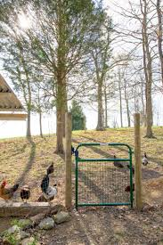 how to start raising backyard chickens in 7 simple steps wholefully