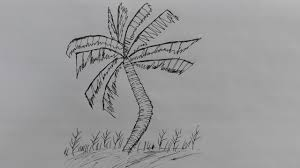 how to draw a coconut tree pencil drawing of coconut tree coconut