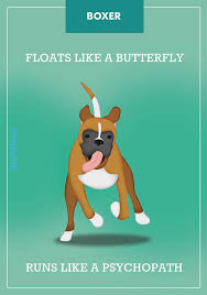 boxer dog in heaven top 25 best boxers ideas on pinterest boxer puppies boxer dogs