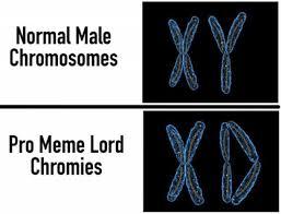 Xd Meme - dopl3r com memes xy xd normal male chromosomes pro meme lord