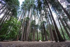 john muir dog quote john muir trail day 0 lone pine to yosemite valley trail to peak