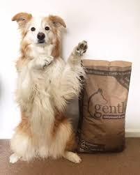 Gentle Cold Pressed Dog Food Devon