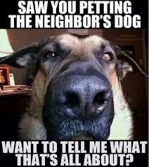 Dog Teeth Meme - best 23 dog teeth meme wallpaper site wallpaper site