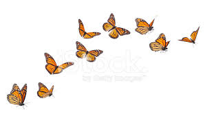 monarch butterflies in various flying isolated on whit