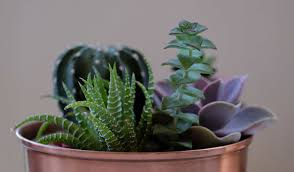 indoor plants expert indoor plants expert