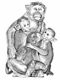 the art of thomas geissmann animals
