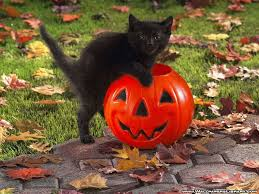 happy halloween pumpkin wallpaper halloween cat wallpapers wallpaper cave
