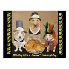 Happy Thanksgiving Funny Images Funny Thanksgiving Gifts On Zazzle