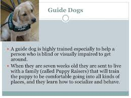 Dog Going Blind What To Do Understanding Guide Dogs And The Jobs They Do Meeting A Guide Dog