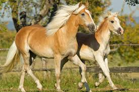real horse colors and equine color genetics