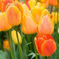 64 best fall planted bulbs images on pinterest flower gardening