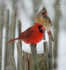 100 birds images