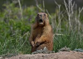 Groundhog Meme - groundhog day 2018 memes funny photos images best jokes