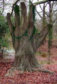 has to be photoshopped but so cool looking roots