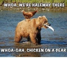 Meme Bear - awhoa were halfway there whoa oah chicken on a bear meme on me me