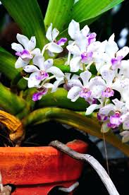 orchids for sale orchids followfirefish