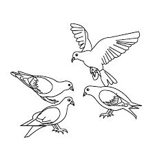 bird coloring pages pigeon coloringstar