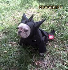Frenchie Halloween Costume 191 Frenchie Costumes Images French Bulldog
