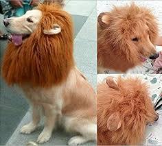 Halloween Costumes Large Dogs Amazon Looching 1pcs Brown Lion Mane Costume Big Dog Lion