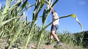 chambre agriculture haute saone haute saône eau et agriculture un équilibre à trouver