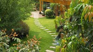 amazing landscape design for front yards and backyards plants