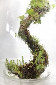 309 best terrariums water gardens images on pinterest slug