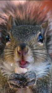 best 25 what do squirrels eat ideas on pinterest what squirrels