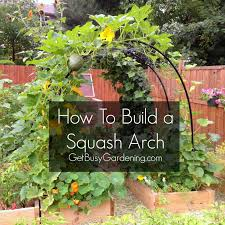 how to build a pvc squash cucumber arch