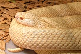 How To Find Snakes In Your Backyard What Does It Mean When You Dream About Snakes