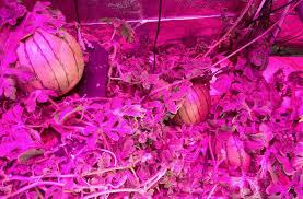 best grow lights for vegetables bossled 1200w full spectrum led grow light bossled best led grow